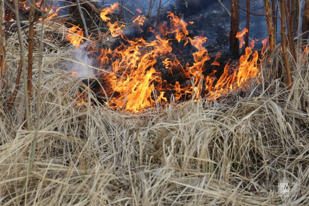 Пал сухой травы: опасность и ответственность