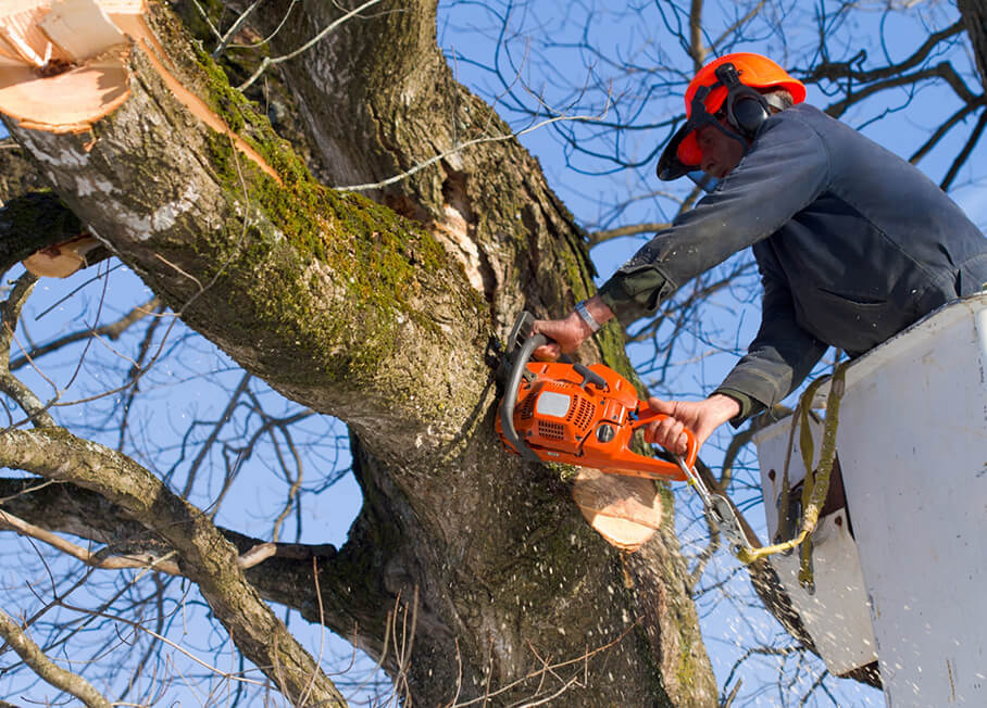 Планы по санитарной рубке деревьев